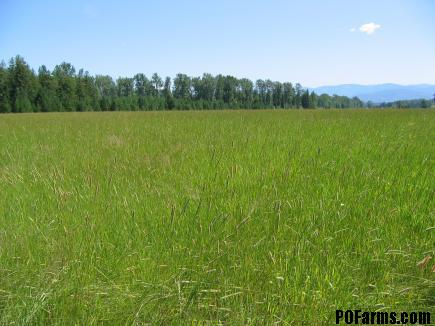PASTURE AT PEND OREILLE FARMS NORTH